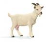 Koza domowa (13719)