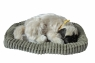 Śpiący pies na poduszce - Mops (107196)
