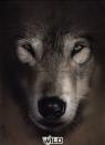 Teczka z gumką A4 Wild Wilk