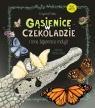 Gąsienice w czekoladzie I inne tajemnice motyli