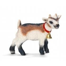 Młoda koza domowa new 2013 (13720)