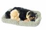 Śpiący pies na poduszce - Wilczur (107202)Wiek: 3+
