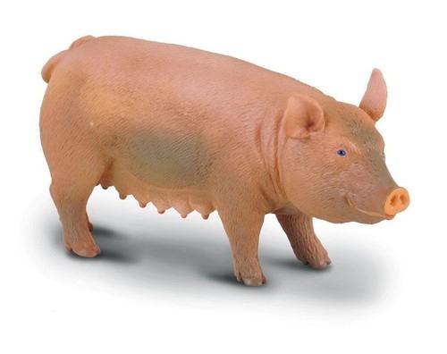 Świnia maciora M