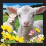 Pocztówka 3D Owca