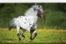 Kalendarz 2018 KTT Trójdzielny płaski Koń