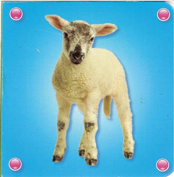 Kosteczka - Owca praca zbiorowa