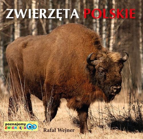 Poznajemy zwierzęta: Zwierzęta Polskie Wejner Rafał