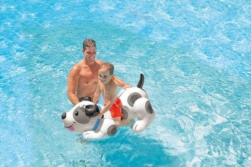 Pływajacy pies