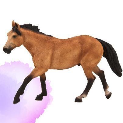 ANIMAL P. Koń rasy Quarter (F7121)