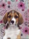 Błyszczący pamiętnik 18-3660PS Pies
