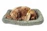 Śpiący pies na poduszce - Golden (107219)Wiek: 3+