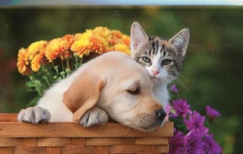 Kalendarz 2018 KTT Trójdzielny płaski Pies kot