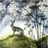 Karnet kwadrat z kopertą Hare and Hogweed