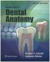 Woelfels Dental Anatomy Gabriela Weiss, Rickne Scheid