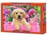 Puzzle 500: Labrador Puppy in Pink Box (52226)