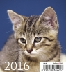 Kalendarz 2016 Kociaki Mini