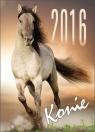 Kalendarz 2016 SM 3 Konie