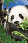 Mini kartka 3D Panda