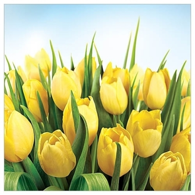 Karnet kwiatowy FF40