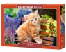 Puzzle Ginger Kitten 500 elementów (52240)