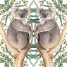 Karnet kwadrat z kopertą Koala