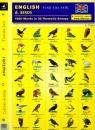 Angielski Dobierz do pary 6 Birds