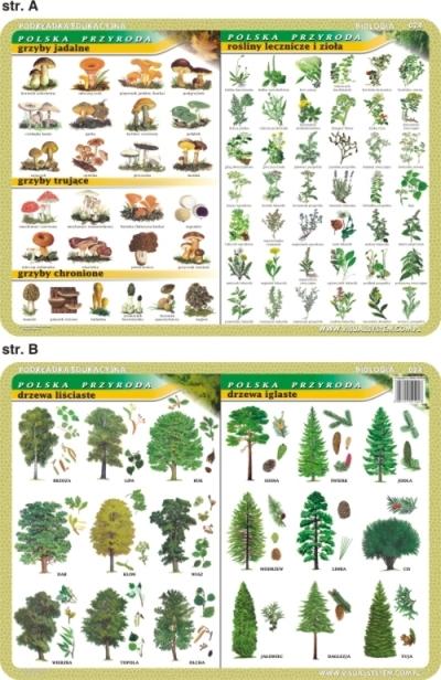 Podkładka edukacyjna. Grzyby, rośliny lecznicze i zioła, drzewa inne
