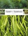 Trawy i trawniki