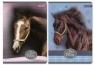 Zeszyt  A5 w linie 60 kartek Konie mix