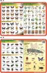 Podkładka edukacyjna. Motyle, owady szkodniki, owady