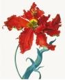 Karnet 17x14cm z kopertą Parrot Tulip