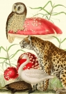 Karnet B6 z kopertą Zwierzęta i grzyby