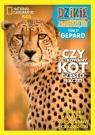 Dzikie Zwierzęta część 17 Gepard