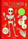Ciało człowieka. Anatomia dla początkujących. Złóż model i zbadaj ludzki praca zbiorowa