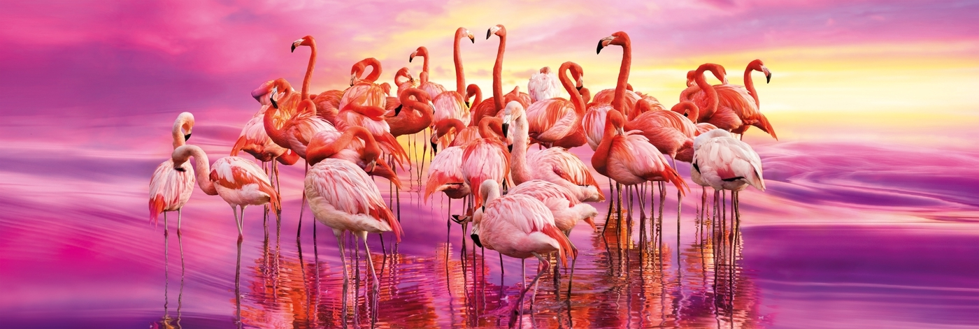 Clementoni, puzzle Panorama High Quality Collection 1000: Flamingo Dance (39427)