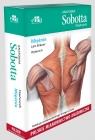 Anatomia Sobotta Flashcards. Mięśnie. Polskie mianownictwo anatomiczne