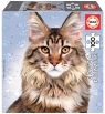 Puzzle 100 Koty - Maine coon G3