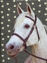 Błyszczący pamiętnik 18-3660HS Koń