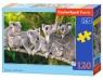 Puzzle 120: Family of Koalas