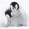 Karnet kwadrat z kopertą A pair of Emperor Penguin chicks