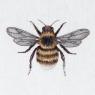 Karnet kwadrat z kopertą Bee
