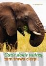Gdzie słonie walczą, tam trawa cierpi