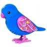 Ptaszek ćwierkający i mówiący bez klatki Gwiezdne Światełko