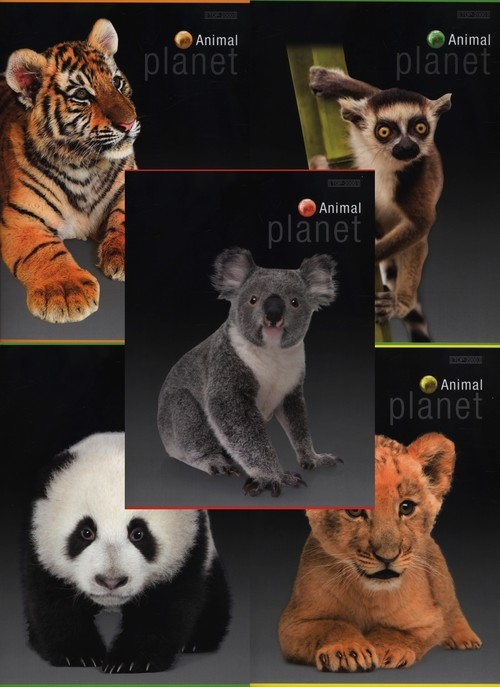 Zeszyt A5 Top-2000 w kratkę 60 kartek Animal Planet 10 sztuk mix
