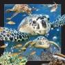 Magnes 3D Żółw Morski