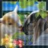 Pocztówka 3D Wielkanocne baranki