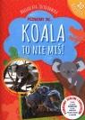 Poznajmy się... Koala to nie miś