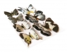 Motyle samoprzylepne 7 sztuk CRAFT SHOP