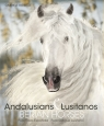 Andalusians Lusitanos Boiselle Gabriele