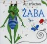 Żaba. Biblioteczka niedźwiadka Jan Brzechwa